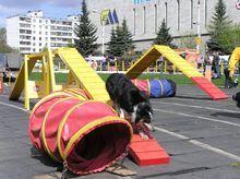А в России сегодня собачий бум - ч. 2