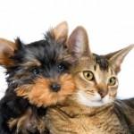 Ветеринары бьют тревогу